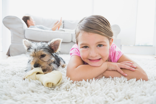 How-to-Keep-Carpets-Clean-in-Pet-Friendly-Homes